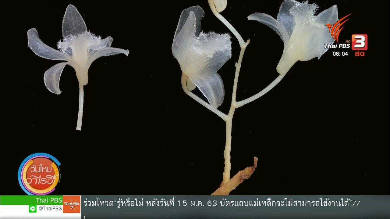 วันใหม่วาไรตี้ - จับตาข่าวเด่น : นักวิจัยไทย ค้นพบกล้วยไม้สกุลหวายชนิดใหม่ของโลก