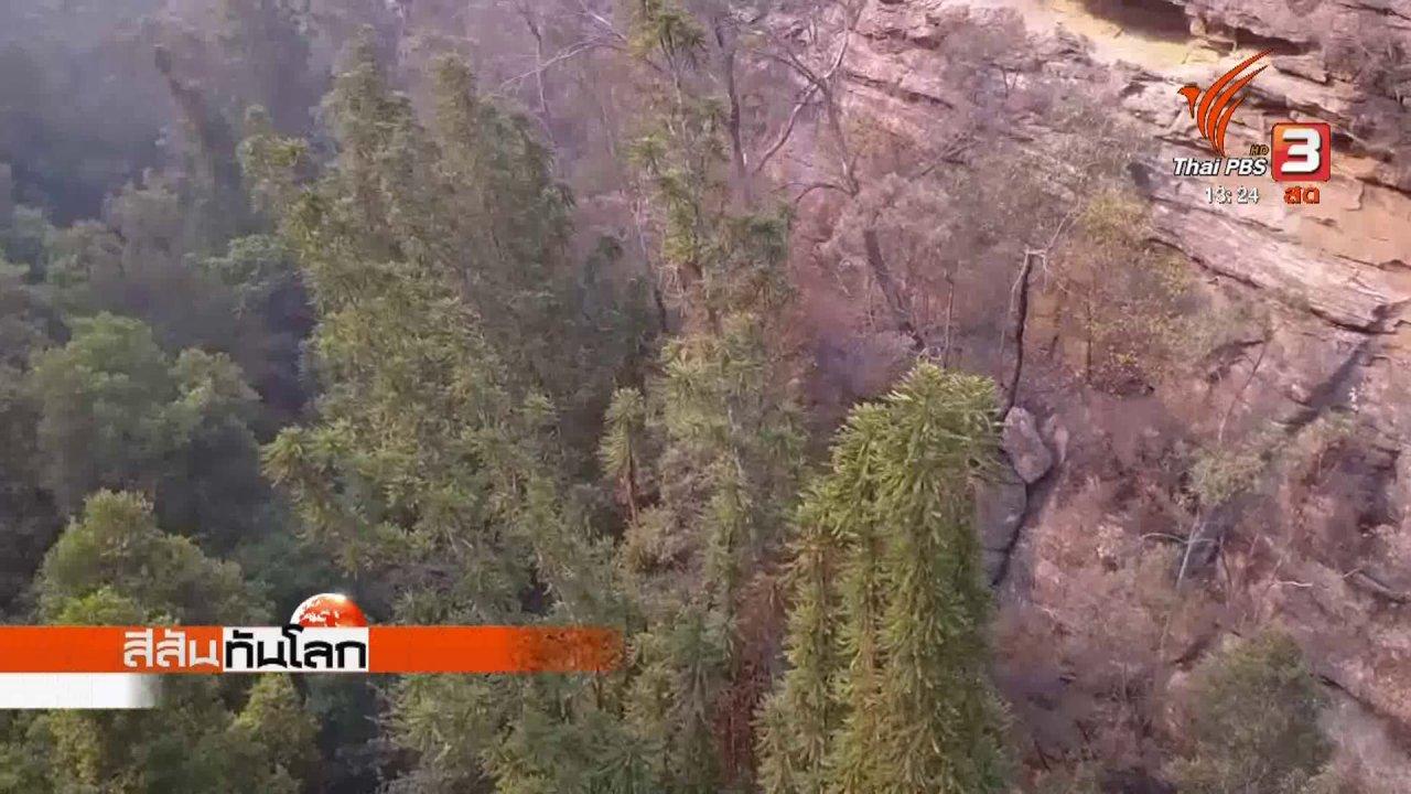 สีสันทันโลก - ภารกิจช่วยต้นไม้ไดโนเสาร์จากไฟป่า