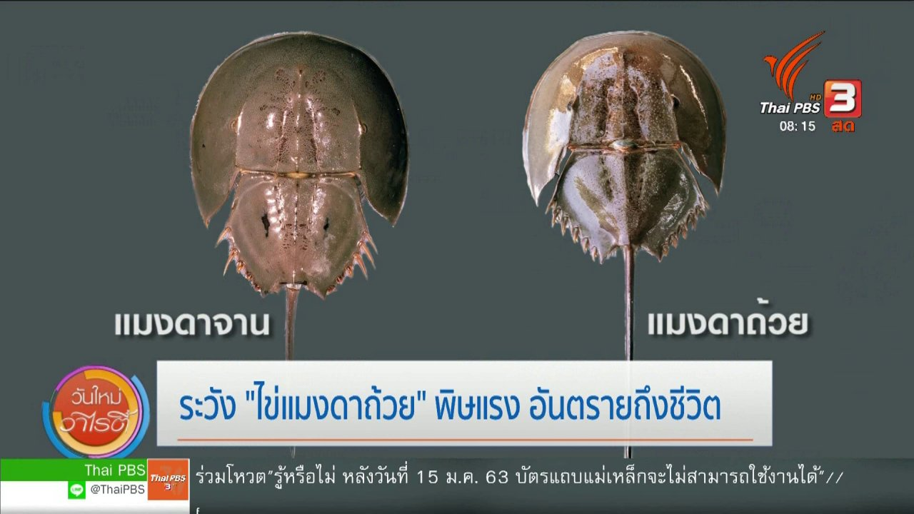 """วันใหม่วาไรตี้ - จับตาข่าวเด่น : ระวัง """"ไข่แมงดาถ้วย"""" พิษแรง อันตรายถึงชีวิต"""