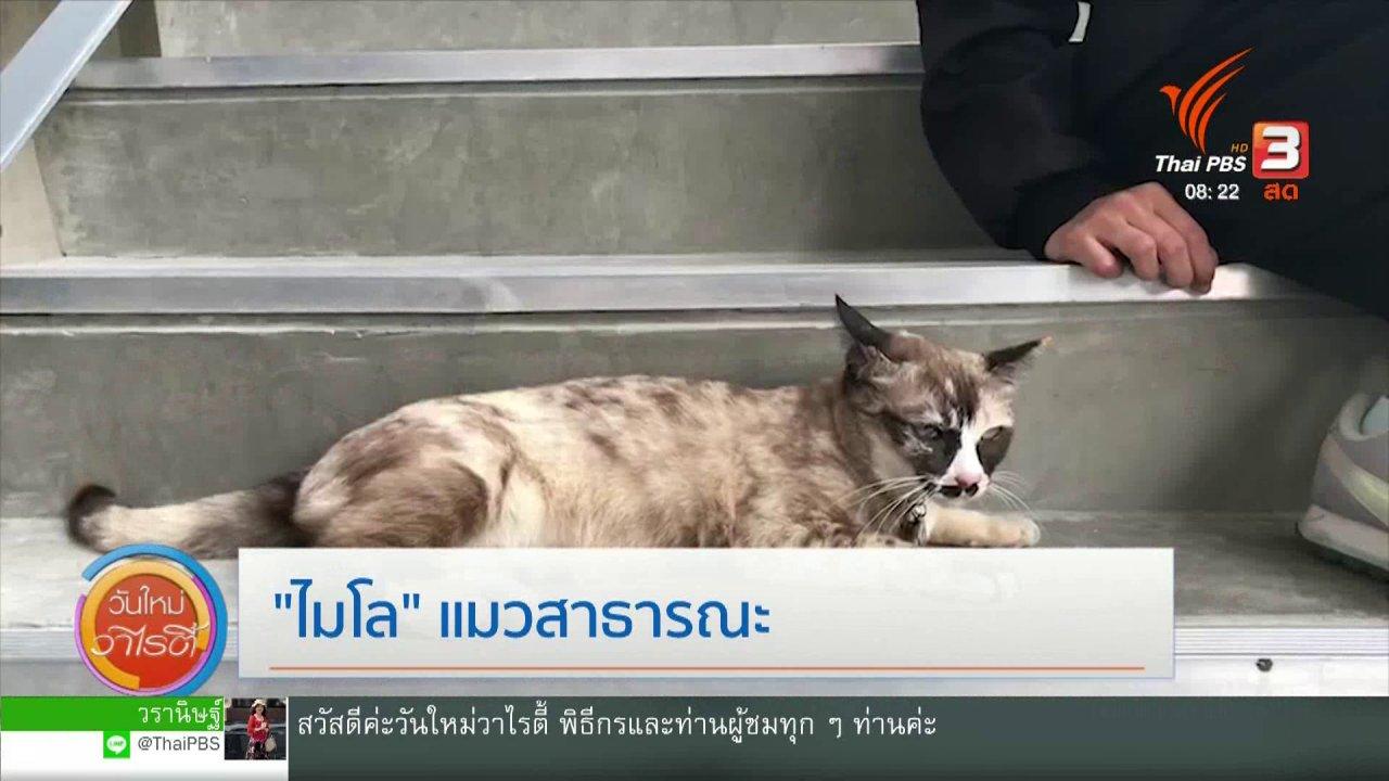 """วันใหม่วาไรตี้ - จับตาข่าวเด่น : """"ไมโล"""" แมวสาธารณะ"""