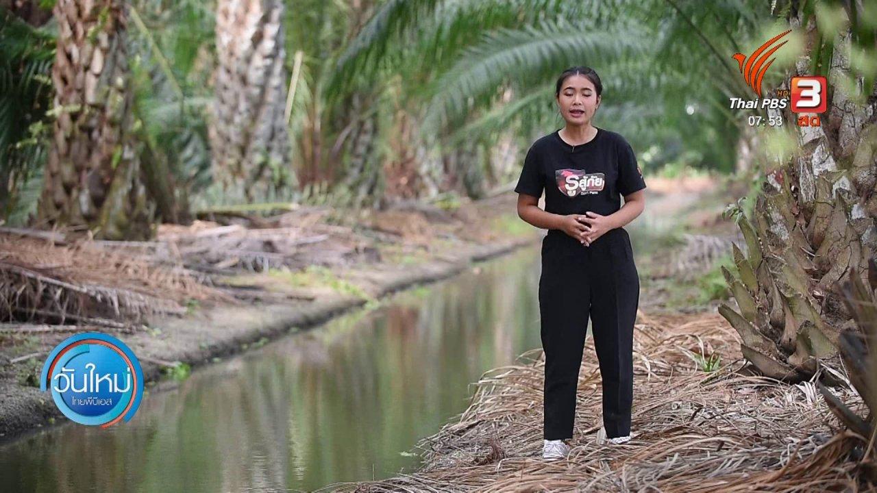 วันใหม่  ไทยพีบีเอส - ทำมาหากิน ดินฟ้าอากาศ : ปาล์มน้ำมัน พืชทนแล้ง