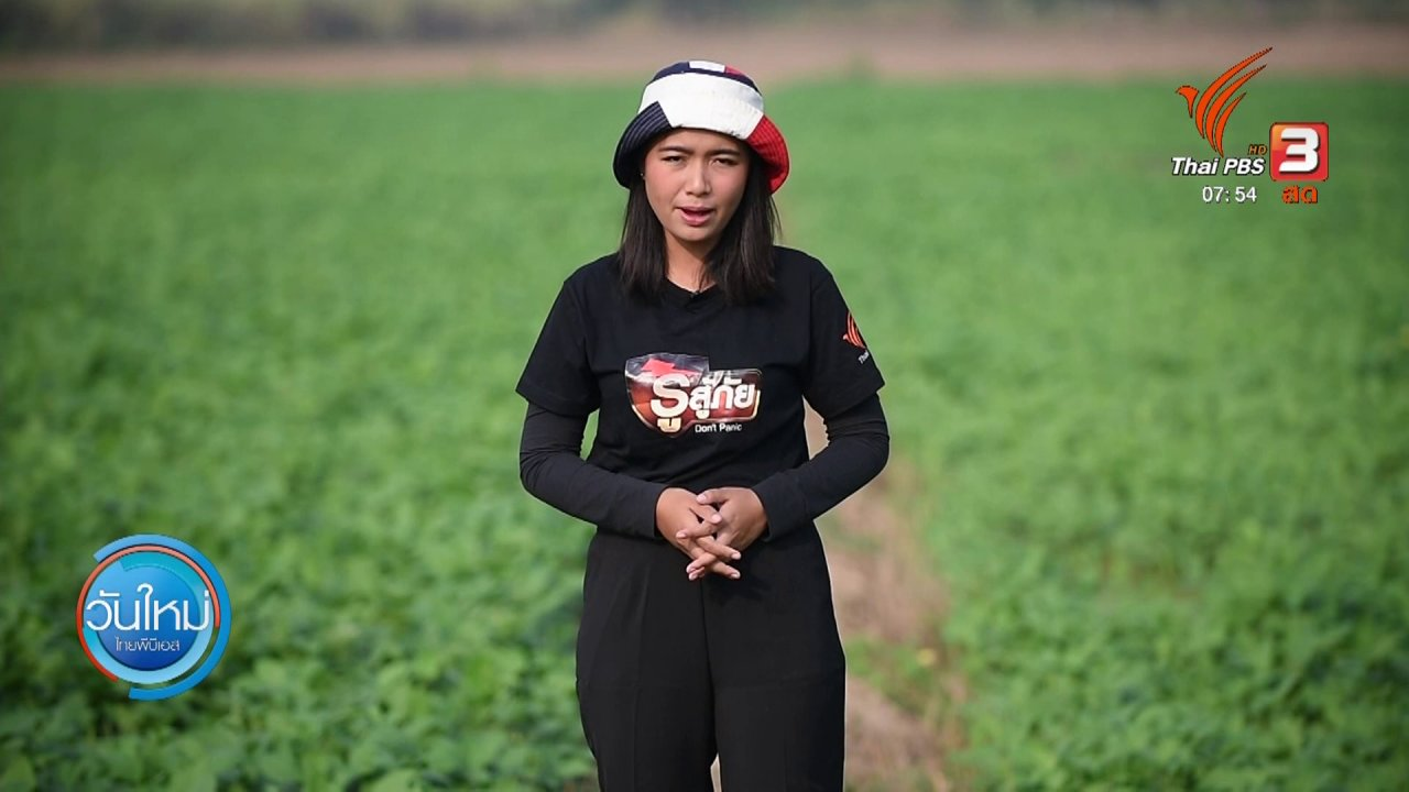 วันใหม่  ไทยพีบีเอส - ทำมาหากิน ดินฟ้าอากาศ : ปรับสภาพดินด้วยการปลูกถั่วเขียว