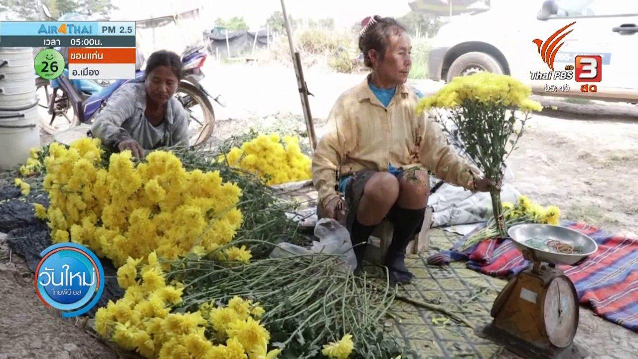 วันใหม่  ไทยพีบีเอส - อากาศแปรปรวนกระทบดอกเบญจมาศเสียหาย