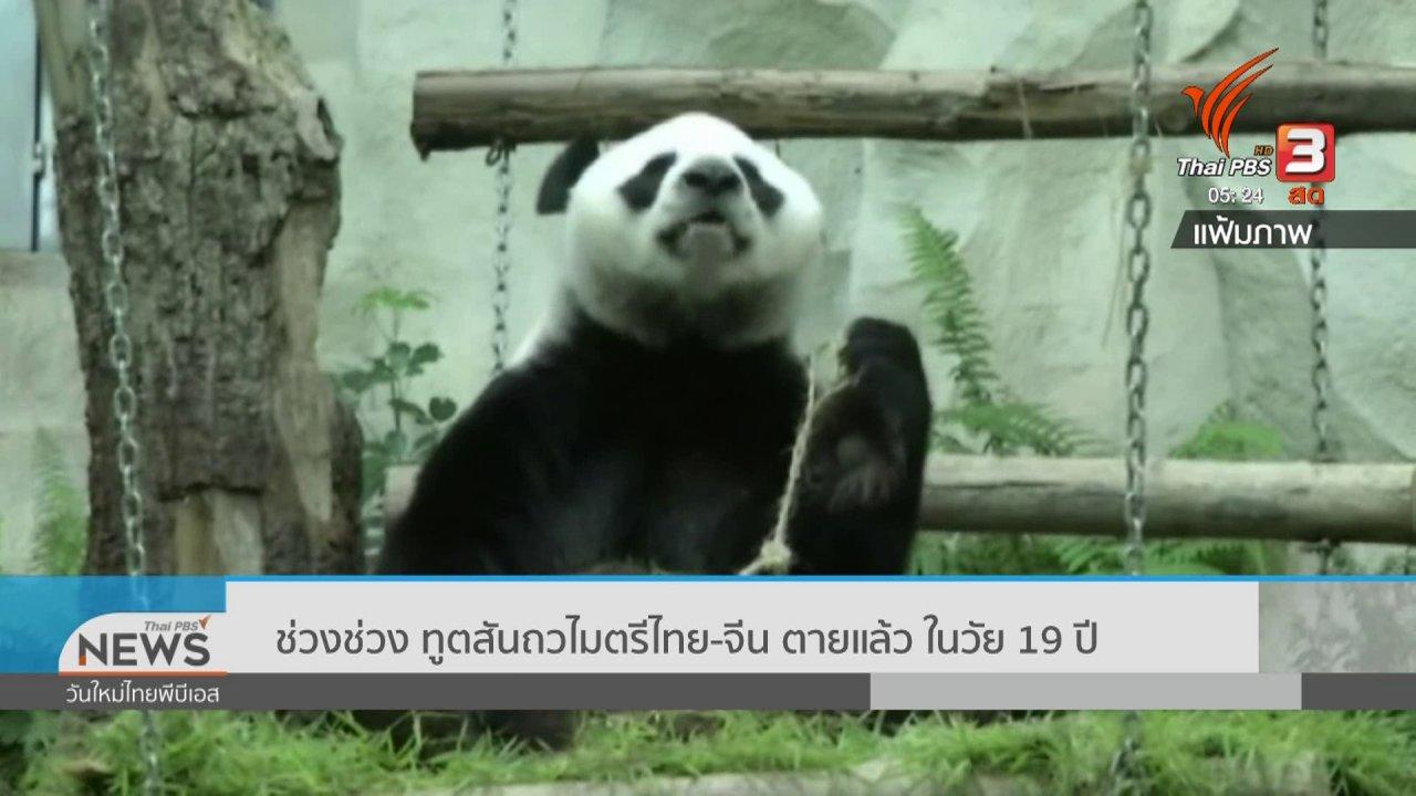 """วันใหม่  ไทยพีบีเอส - """"ช่วงช่วง"""" ทูตสันถวไมตรีไทย - จีน ตายแล้ว ในวัย 19 ปี"""