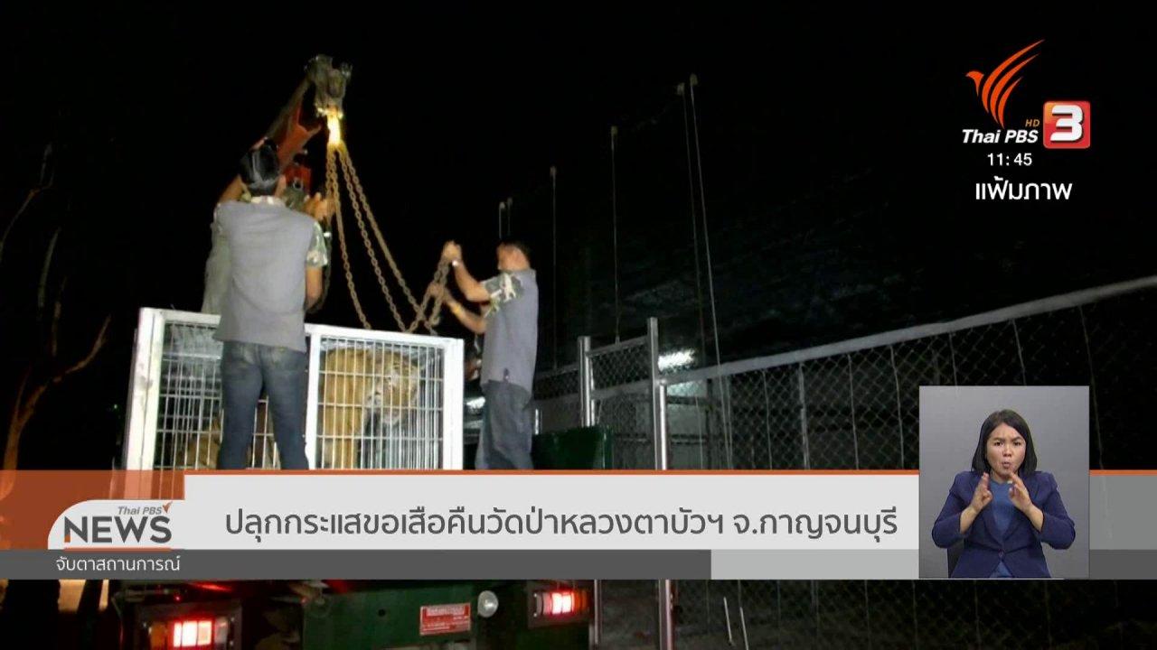 จับตาสถานการณ์ - ปลุกกระแสขอเสือคืนวัดป่าหลวงตาบัวฯ จ.กาญจนบุรี