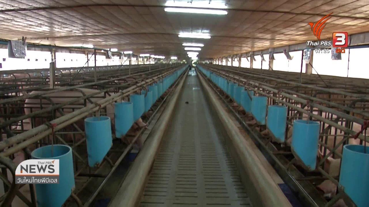 วันใหม่  ไทยพีบีเอส - ชั่วโมงทำกิน : ก.เกษตรฯ ยันยังไม่พบอหิวาห์แอฟริกาหมูระบาดในไทย