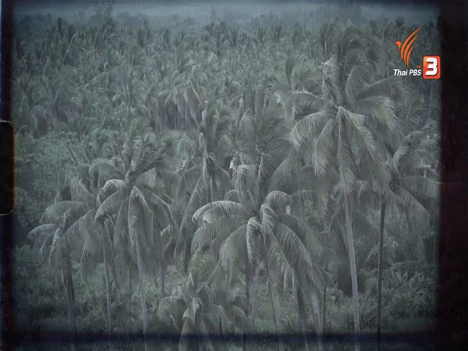 ห้องข่าว ไทยพีบีเอส NEWSROOM - บททดสอบวาระแห่งชาติแก้ PM 2.5