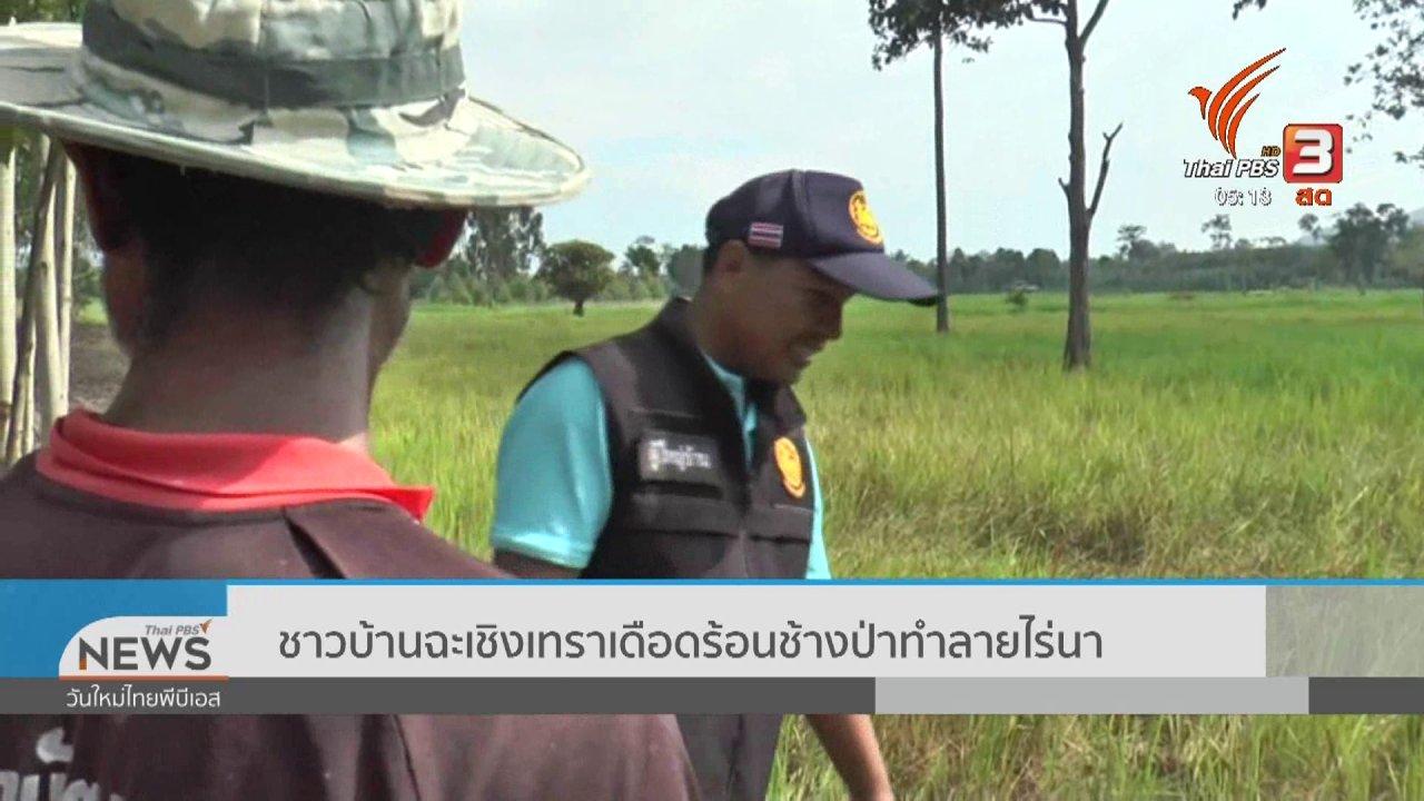 วันใหม่  ไทยพีบีเอส - ชาวบ้านฉะเชิงเทราเดือดร้อนช้างป่าทำลายไร่นา