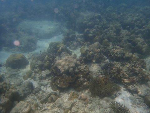 """หน.อุทยานฯ ตะรุเตา โชว์ภาพ """"ปะการังหลีเป๊ะ"""" ไม่พัง"""