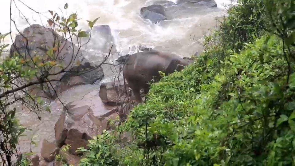 เร่งช่วยชีวิตช้างป่าเขาใหญ่พลัดตกเหวนรก