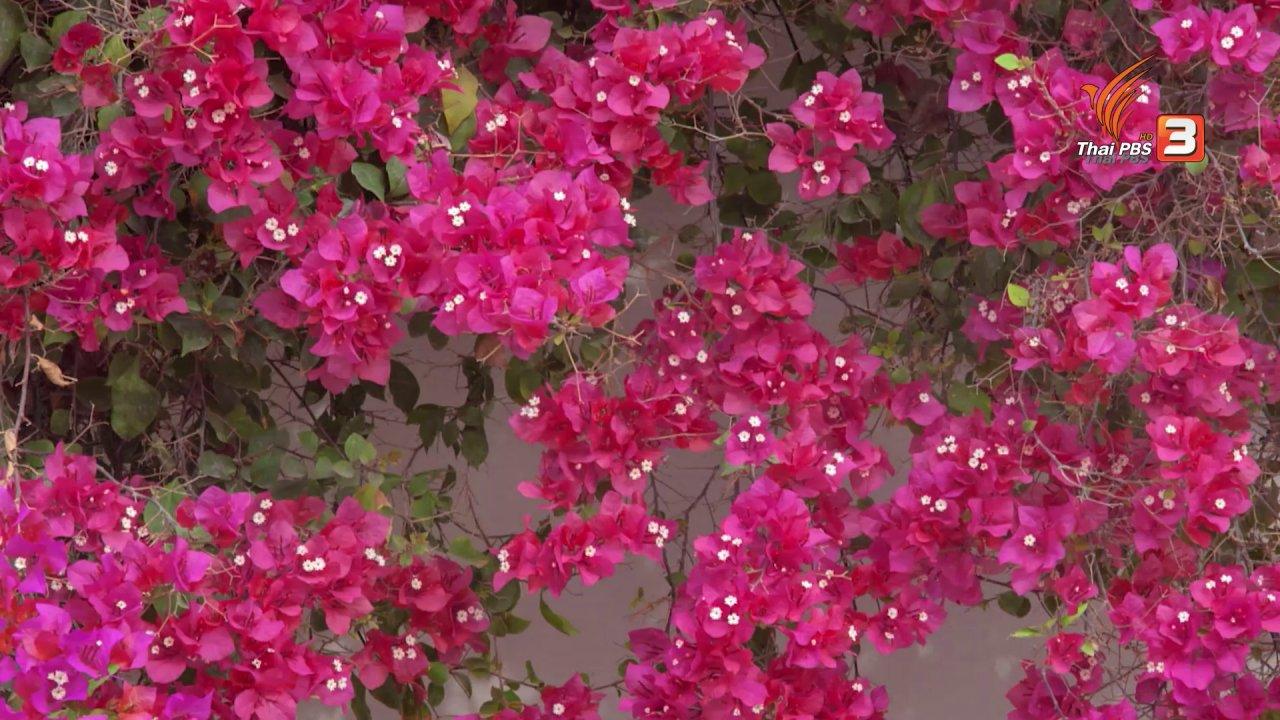 TataTitiToto ไดโนจอมป่วน - เกร็ดน่ารู้กับตาต้าตีตี้โตโต้ : ดอกไม้เป็นยารักษาโรคได้