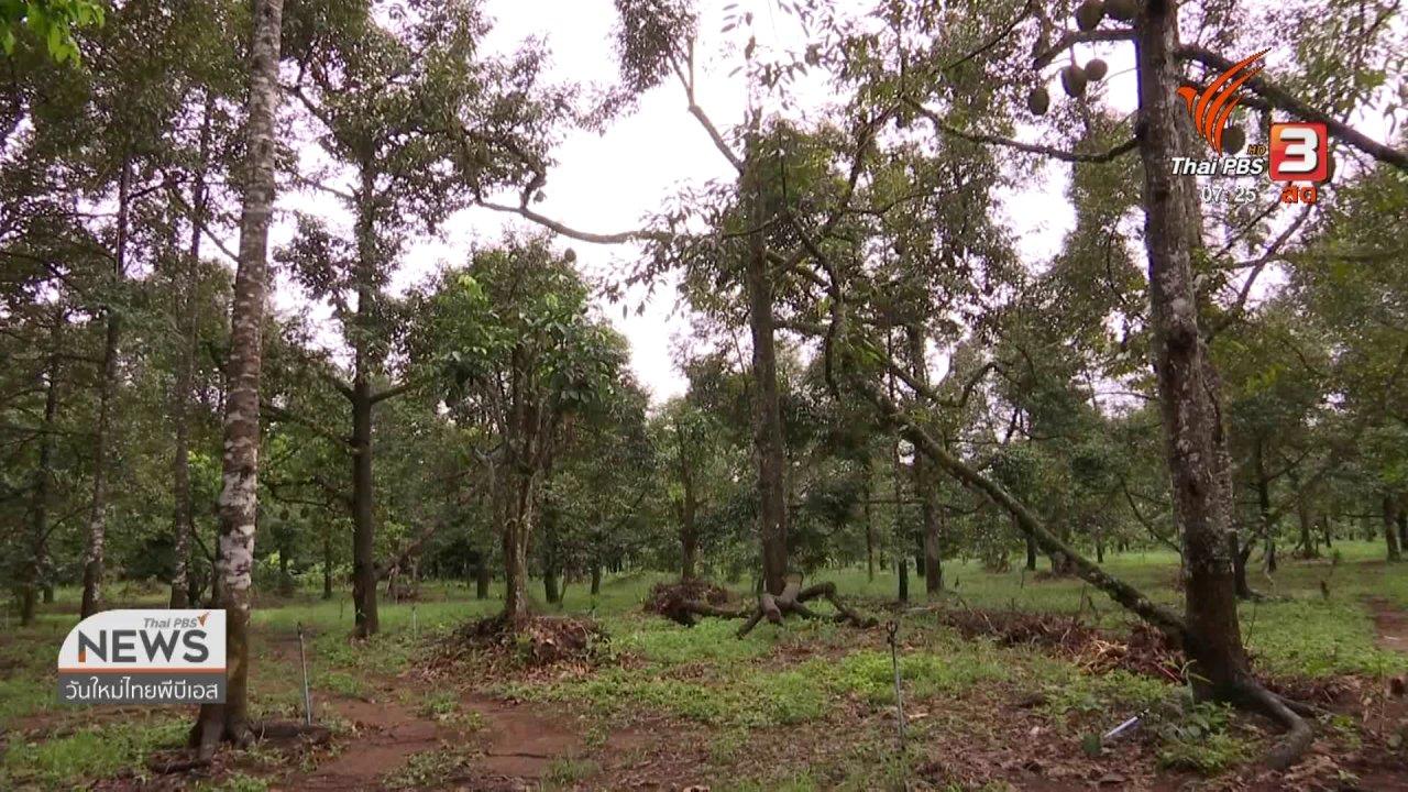 วันใหม่  ไทยพีบีเอส - ชั่วโมงทำกิน : แนะเกษตรกรปรับตัวรับมือดิสรัปชันการเกษตร