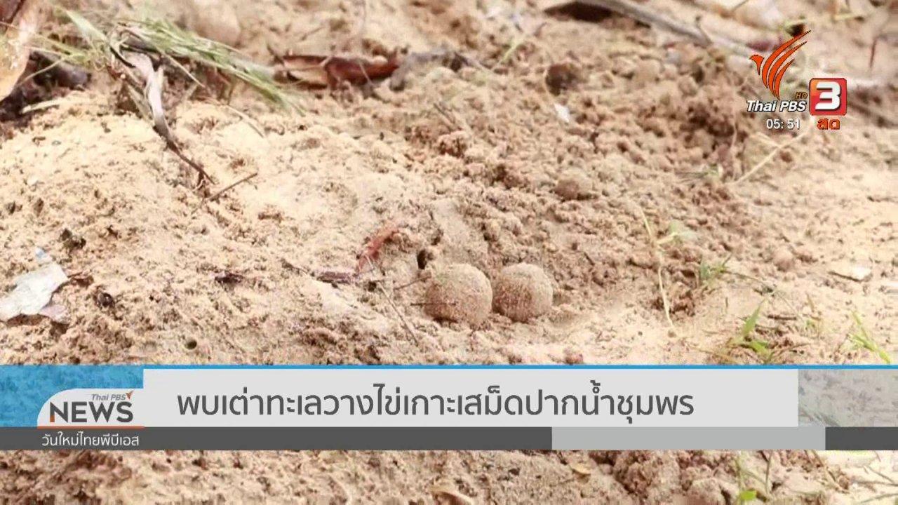 วันใหม่  ไทยพีบีเอส - พบเต่าทะเลวางไข่เกาะเสม็ดปากน้ำชุมพร