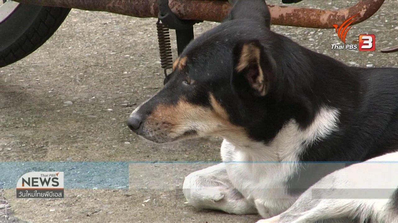 วันใหม่วาไรตี้ - จับตาข่าวเด่น : จับตาสถานการณ์โรคพิษสุนัขบ้า