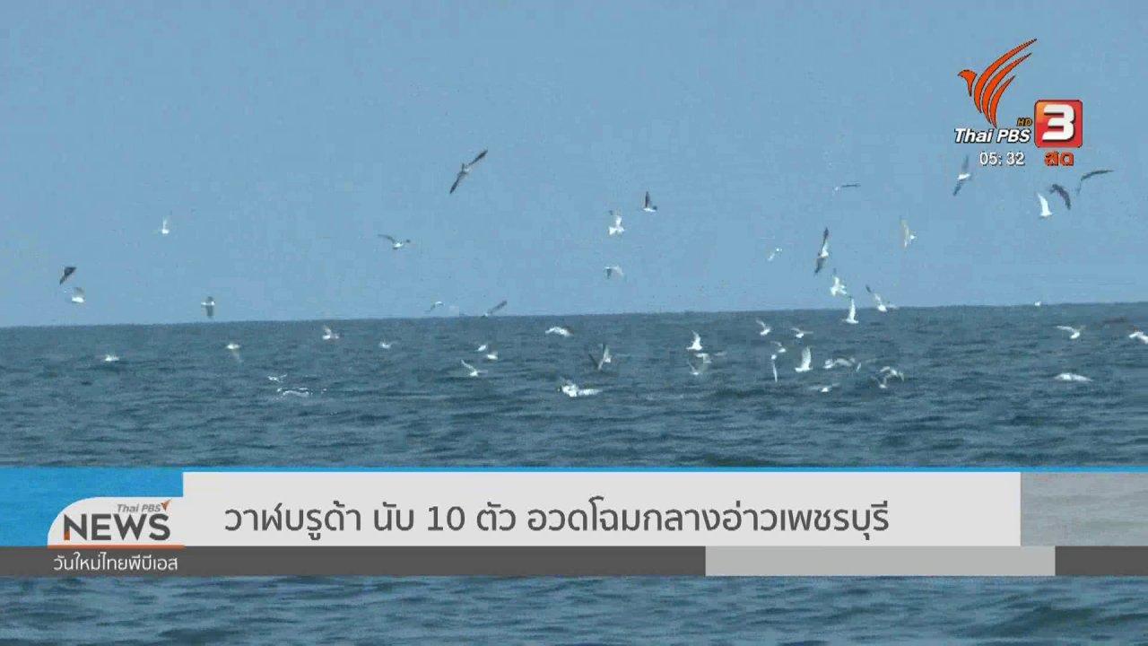 วันใหม่  ไทยพีบีเอส - วาฬบรูด้านับ 10 ตัว อวดโฉมกลางอ่าวเพชรบุรี