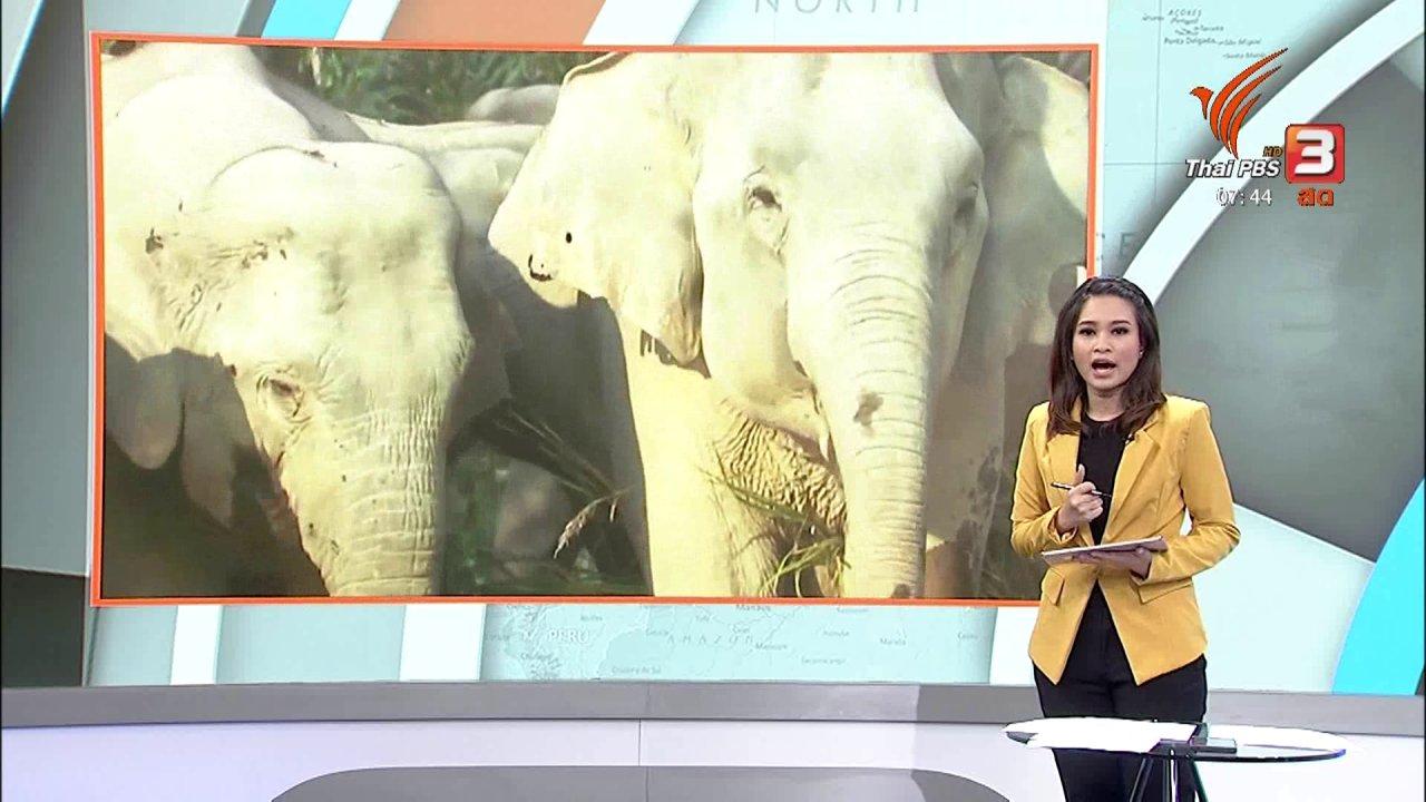 วันใหม่  ไทยพีบีเอส - C-site Report : อธิบดีกรมอุทยานฯ สั่งหารือปัญหาช้างเขาใหญ่