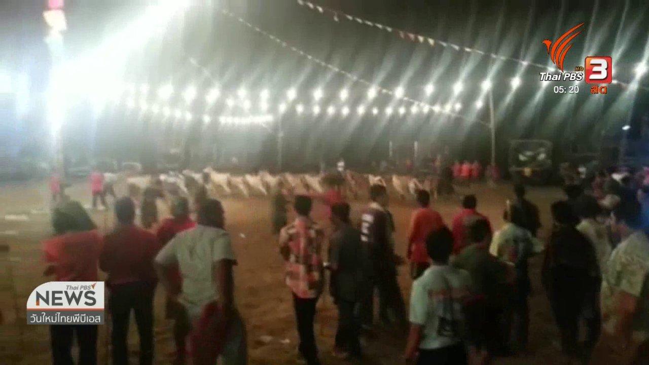 วันใหม่  ไทยพีบีเอส - ไม่อนุญาตแข่งวัวลานในเขตวัด จ.เพชรบุรี