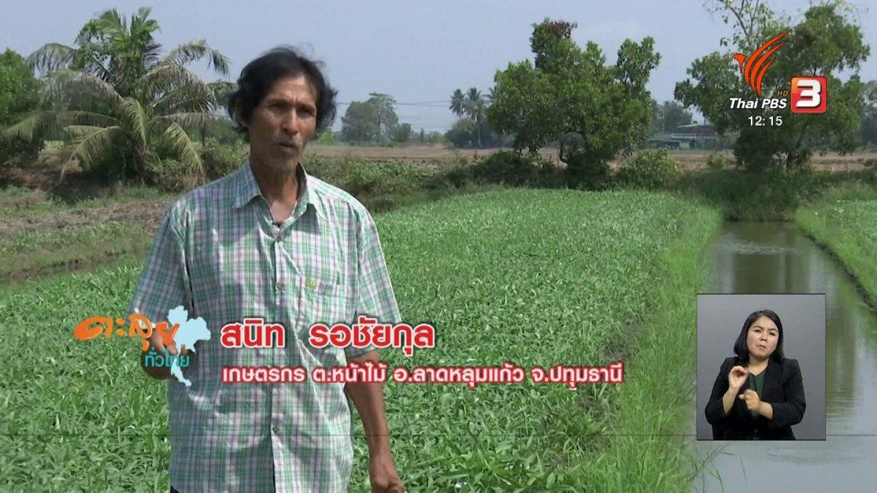 จับตาสถานการณ์ - ตะลุยทั่วไทย : ปลูกผักบุ้ง
