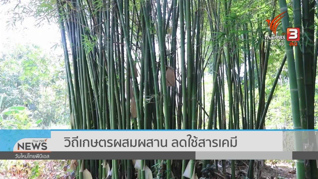 วันใหม่  ไทยพีบีเอส - C-site Report : วิถีเกษตรผสมผสาน ลดใช้สารเคมี