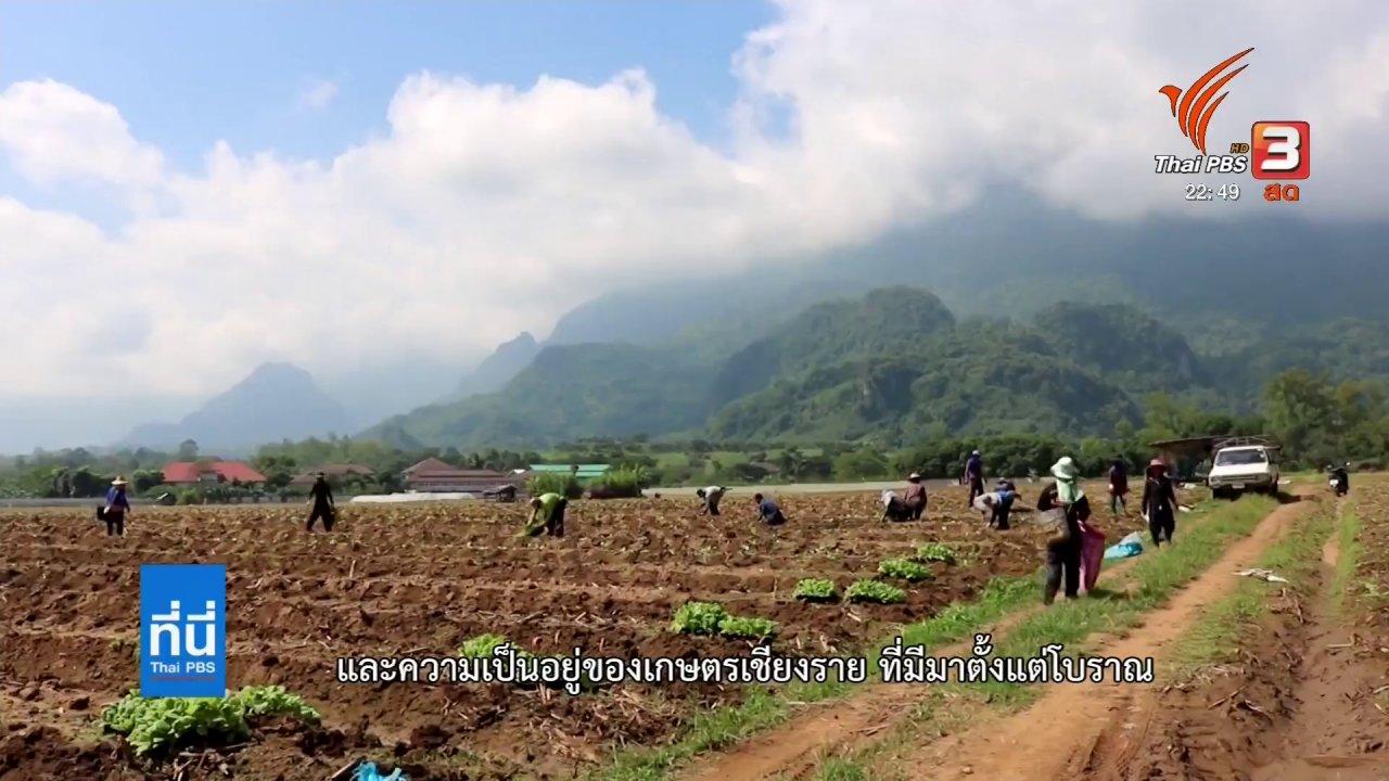 ที่นี่ Thai PBS - ยาสูบ พืชทำเงินอำเภอแม่สาย จ.เชียงราย