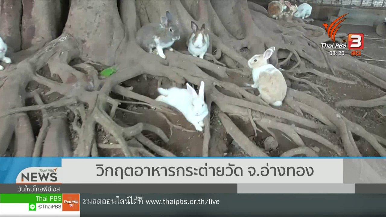 วันใหม่วาไรตี้ - จับตาข่าวเด่น : วิกฤตอาหารกระต่ายวัด จ.อ่างทอง