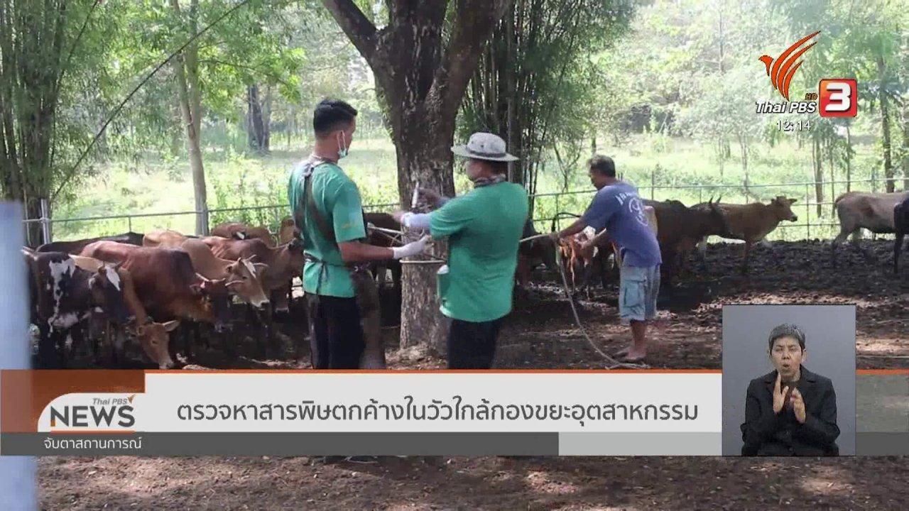 จับตาสถานการณ์ - ตรวจหาสารพิษตกค้างในวัวใกล้กองขยะอุตสาหกรรม