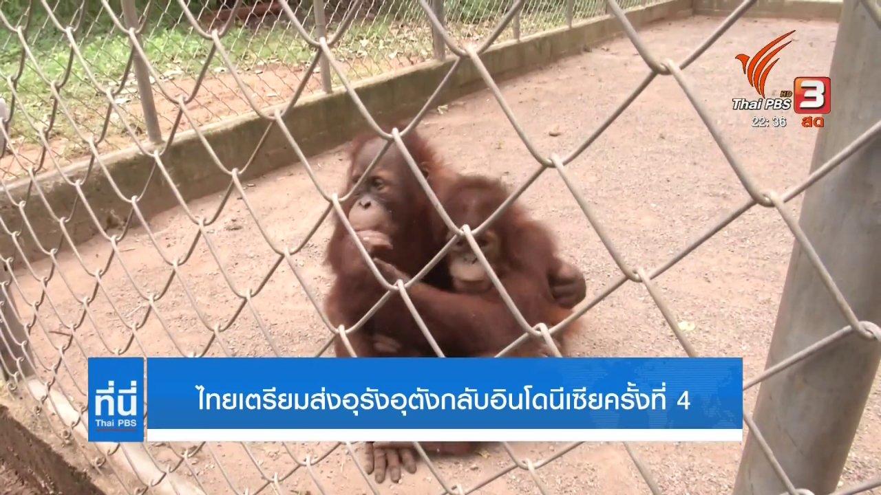 ที่นี่ Thai PBS - ไทยเตรียมส่งอุรังอุตังกลับอินโดนีเซีย ครั้งที่ 4