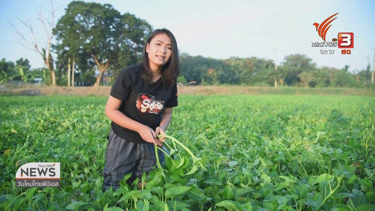วันใหม่  ไทยพีบีเอส - ทำมาหากิน ดินฟ้าอากาศ : ผักบุ้งไทย ปลูกได้ตลอดทั้งปี