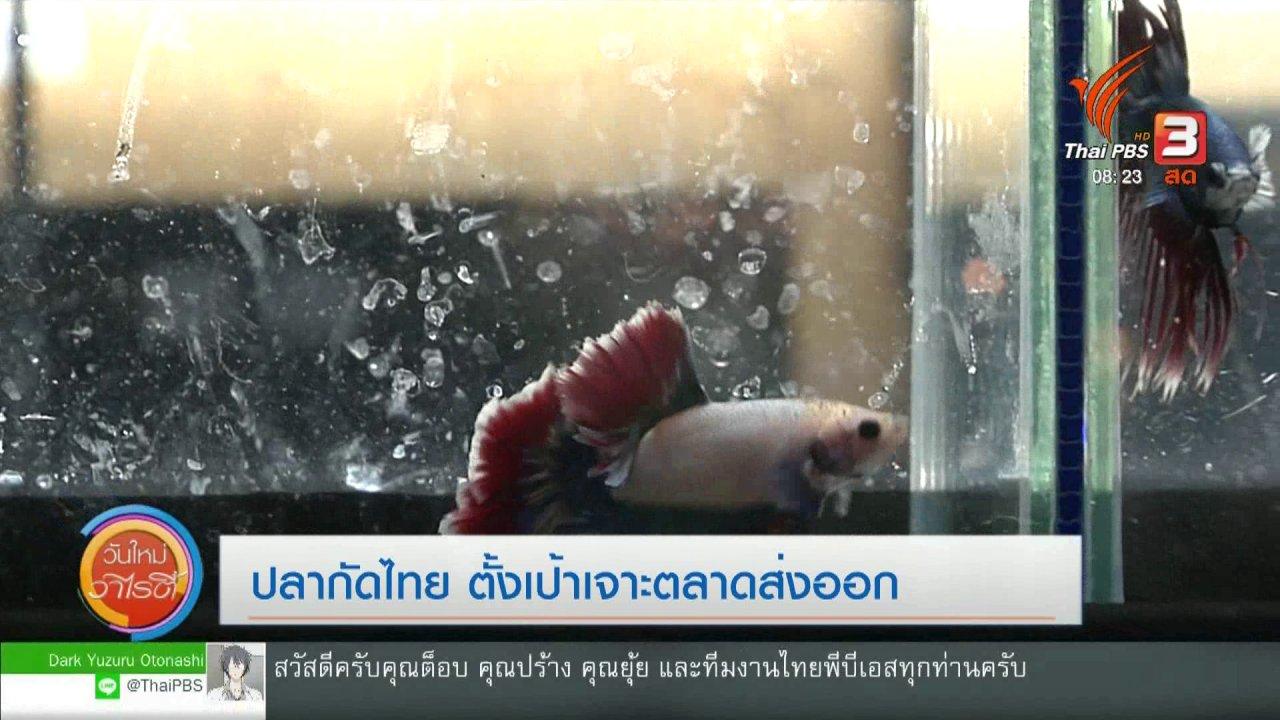 วันใหม่วาไรตี้ - จับตาข่าวเด่น : ปลากัดไทย ตั้งเป้าเจาะตลาดส่งออก