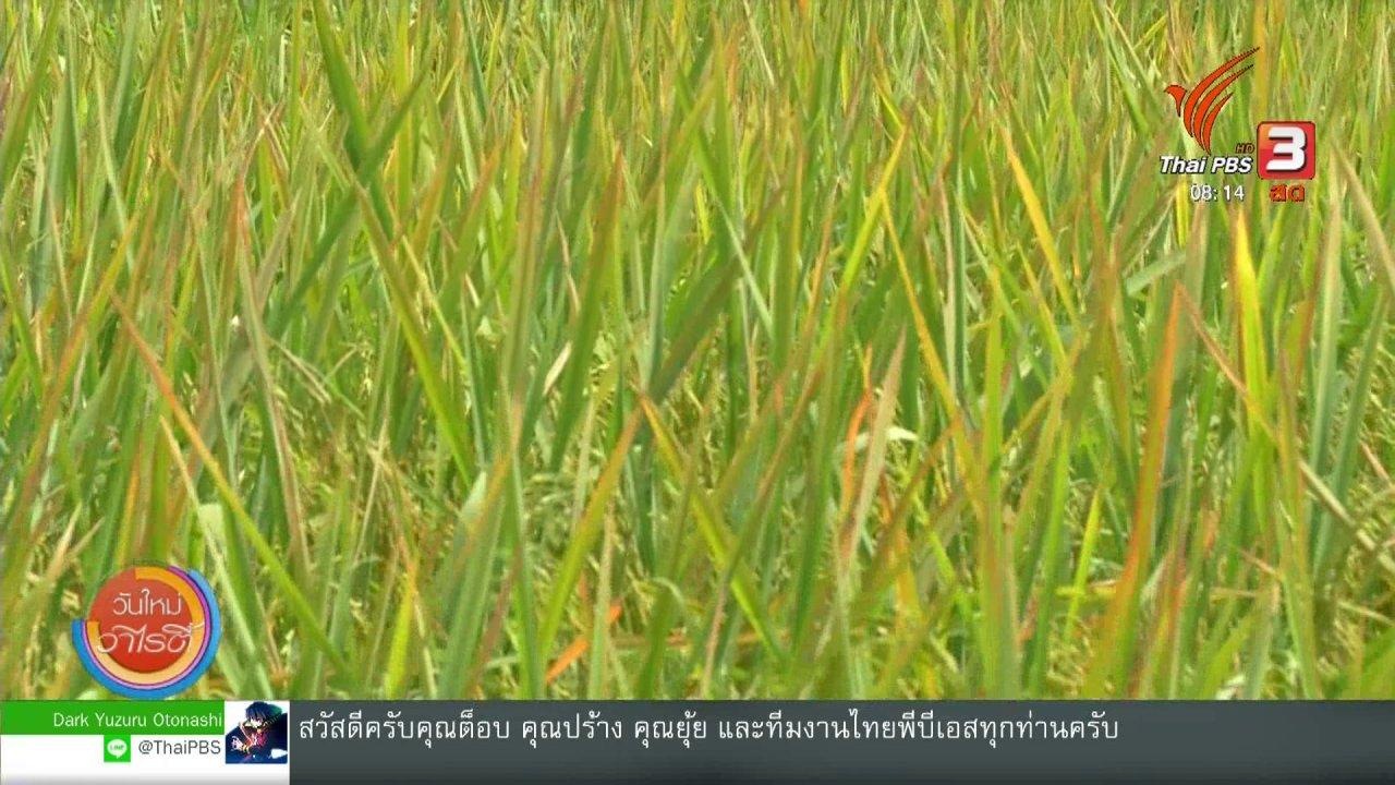 วันใหม่วาไรตี้ - จับตาข่าวเด่น : กระทรวงเกษตรเร่งพัฒนาข้าวไทย แข่งขันตลาดโลก