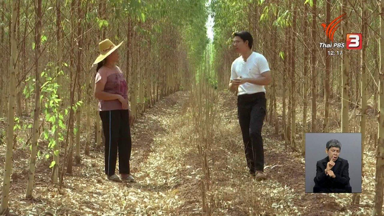 จับตาสถานการณ์ - ตะลุยทั่วไทย : ปลูกไม้มีค่า