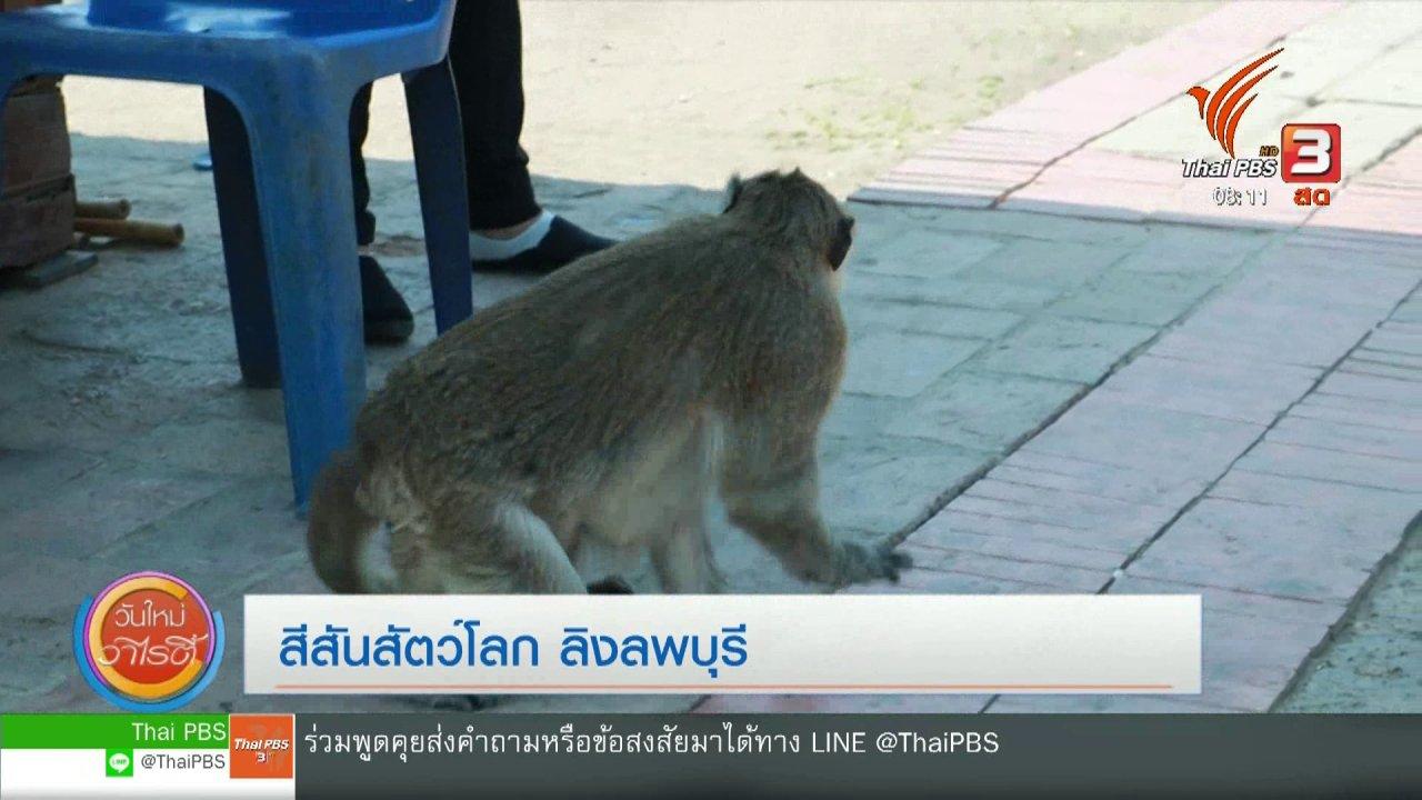วันใหม่วาไรตี้ - จับตาข่าวเด่น : ลิงลพบุรี