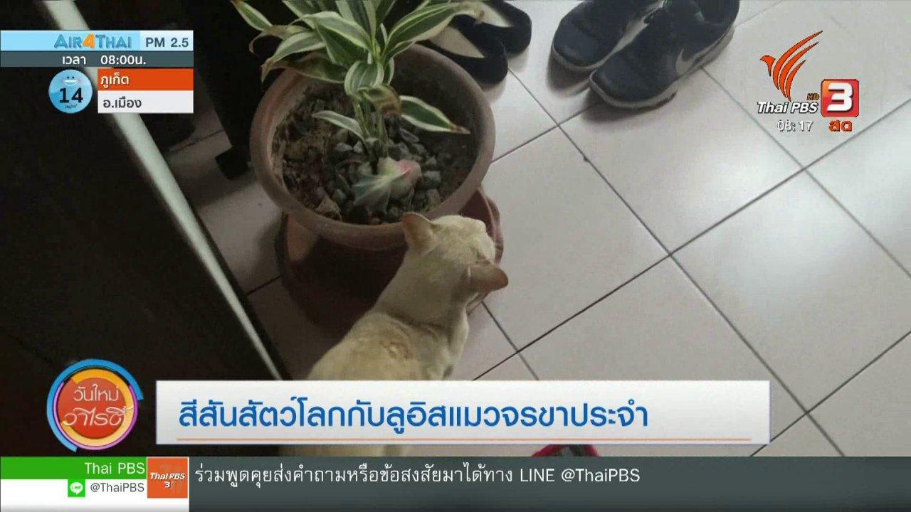 วันใหม่วาไรตี้ - จับตาข่าวเด่น : ลูอิส แมวจรขาประจำ