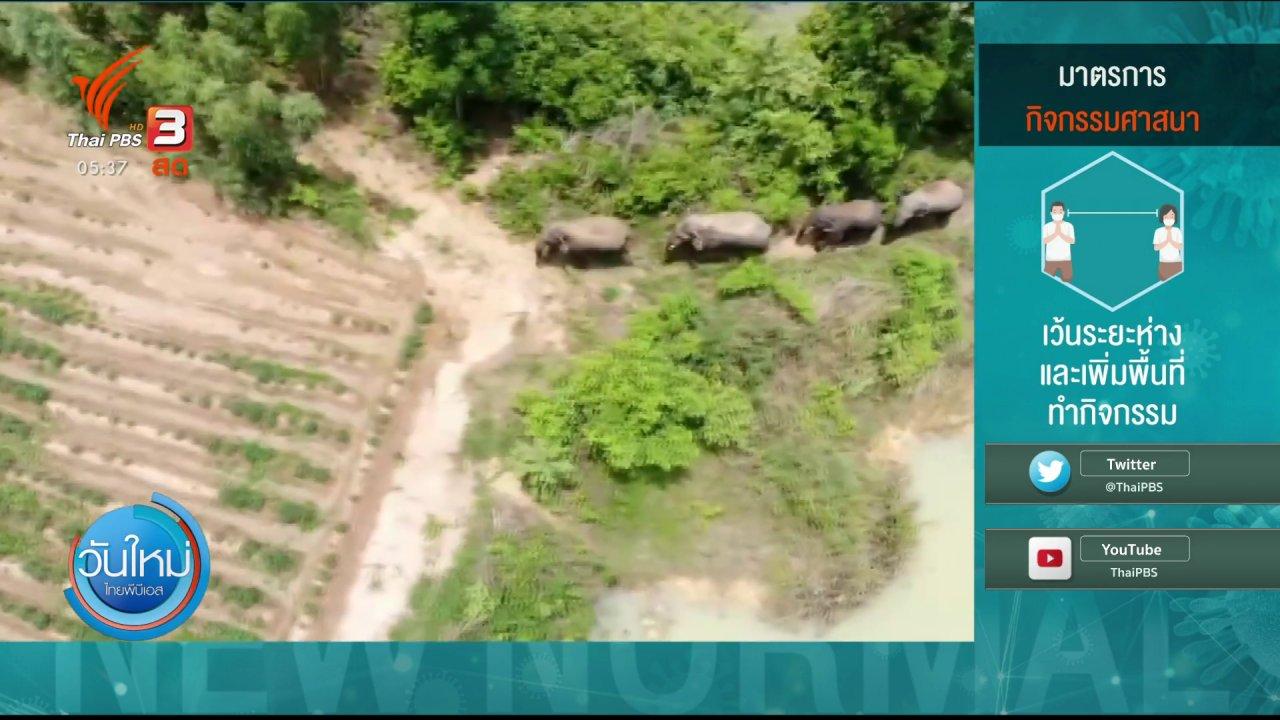 วันใหม่  ไทยพีบีเอส - พบฝูงช้างป่าเขาอ่างฤาไนอีก 4 ตัว จ.ปราจีนบุรี