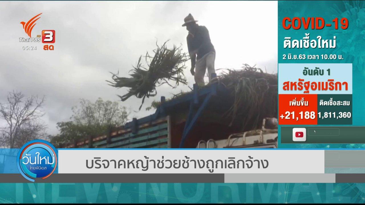 วันใหม่  ไทยพีบีเอส - บริจาคหญ้าช่วยช้างถูกเลิกจ้าง