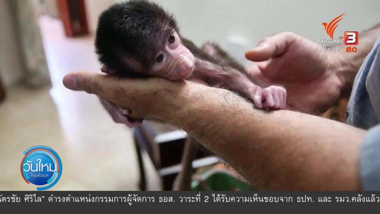 วันใหม่  ไทยพีบีเอส - ลูกสัตว์เกิดใหม่ในปาเลสไตน์เพิ่มขึ้น 3 เท่า ช่วงโควิด-19