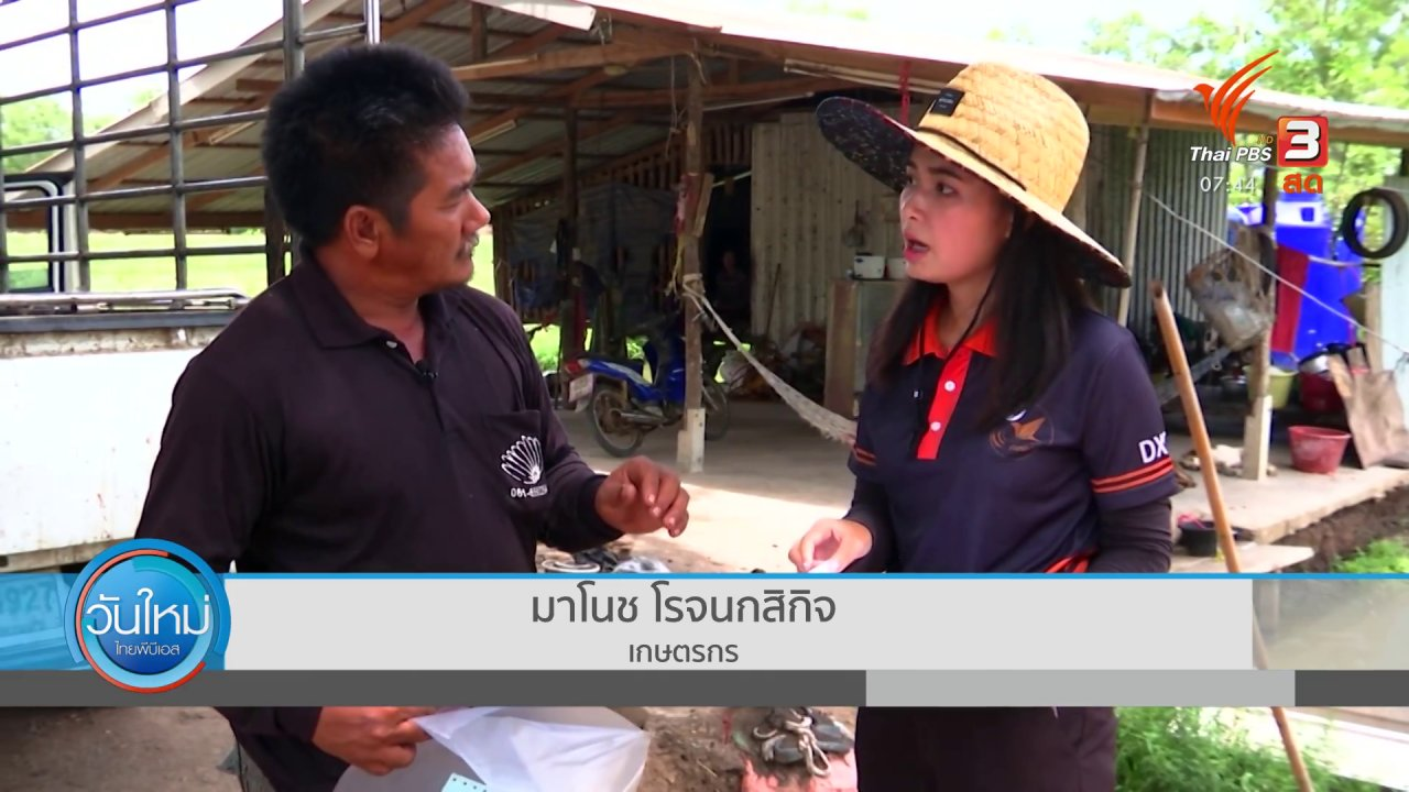 วันใหม่  ไทยพีบีเอส - ตอบโจทย์ภัยพิบัติ : หนี้เกษตรกรเพิ่มขึ้นจากปัญหาภัยแล้ง