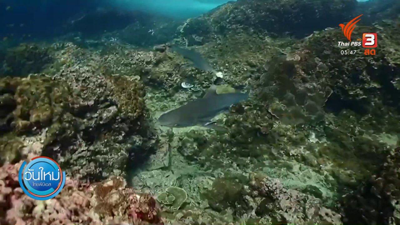 วันใหม่  ไทยพีบีเอส - ฉลามว่ายน้ำแนวปะการังเกาะพีพีหลังเปิดท่องเที่ยว