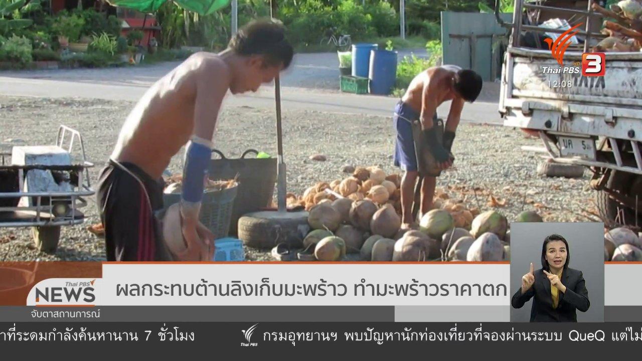 จับตาสถานการณ์ - ผลกระทบต้านลิงเก็บมะพร้าว ทำมะพร้าวราคาตก