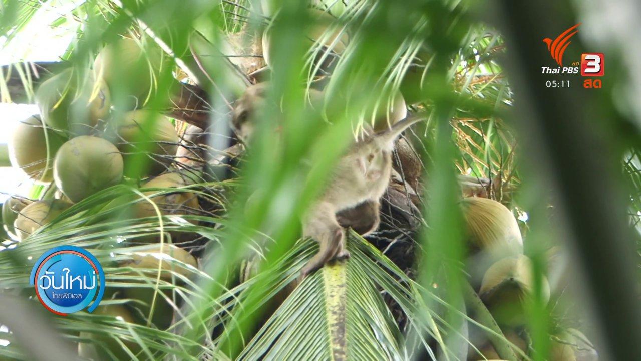 วันใหม่  ไทยพีบีเอส - PETA ชี้หลักฐานทารุณลิงแต่ไม่มีเจตนาโจมตีไทย