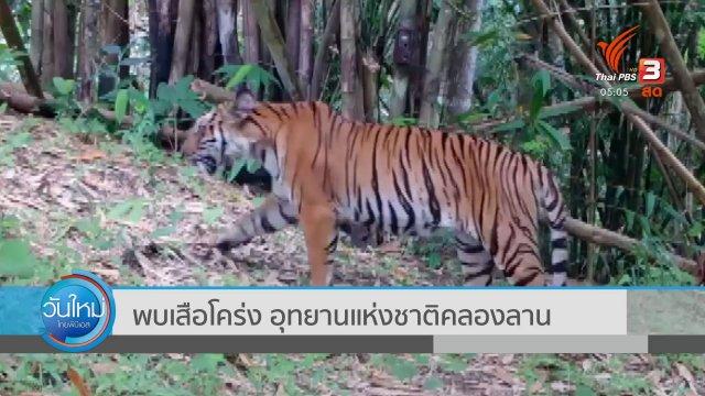 พบเสือโคร่ง อุทยานแห่งชาติคลองลาน