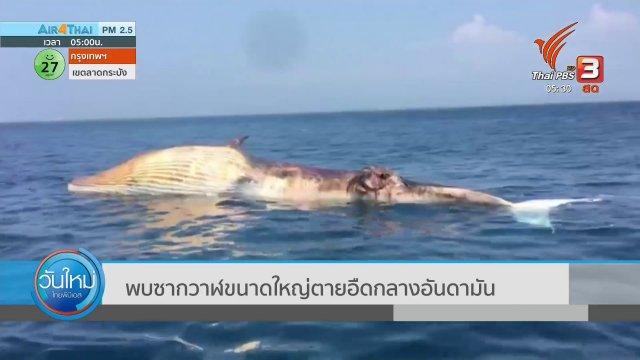 พบซากวาฬขนาดใหญ่ ตายอืดกลางอันดามัน
