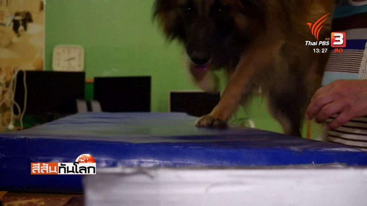 สีสันทันโลก - วิจัยพบสุนัขมีอินฟราเรดตรวจจับความร้อน