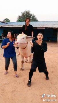 ธิติสรรณ์ ปั้นโหมด นักมวยสากลทีมชาติไทย โชว์สเตปเต้นผ่อนคลายความตึงเครียด