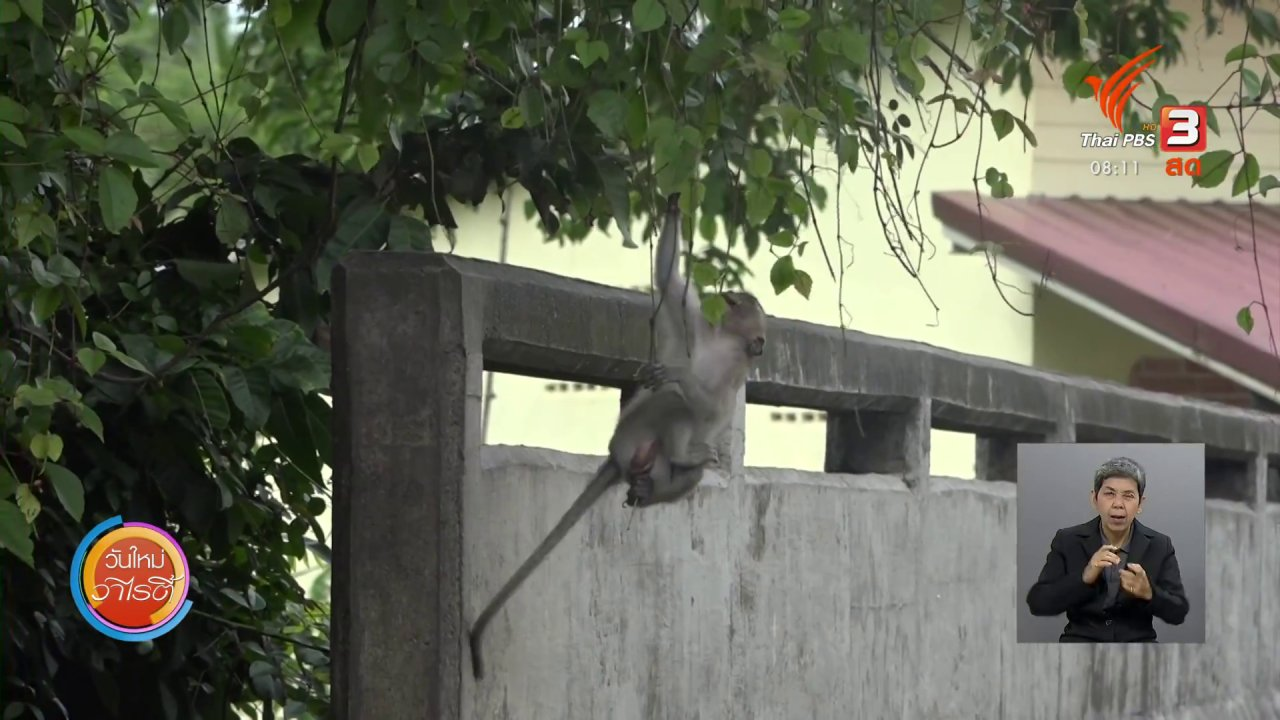 วันใหม่วาไรตี้ - จับตาข่าวเด่น : ปัญหาลิงยึดพื้นที่สวนสาธารณะ จ.สตูล