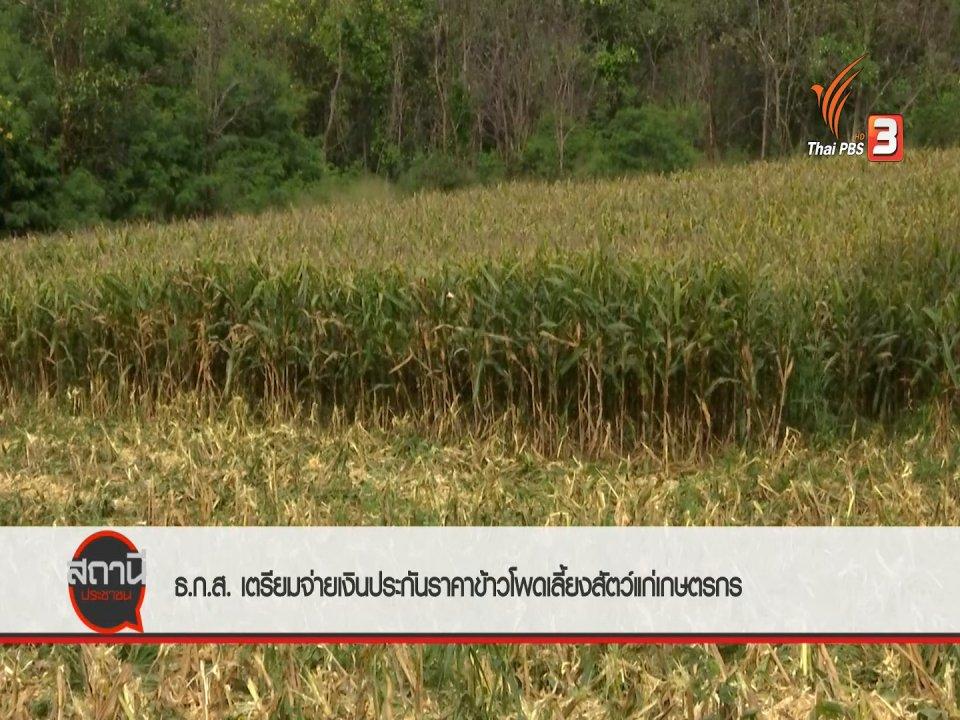 สถานีประชาชน - สถานีร้องเรียน : ธ.ก.ส.เตรียมจ่ายเงินประกันราคาข้าวโพดเลี้ยงสัตว์แก่เกษตรกร