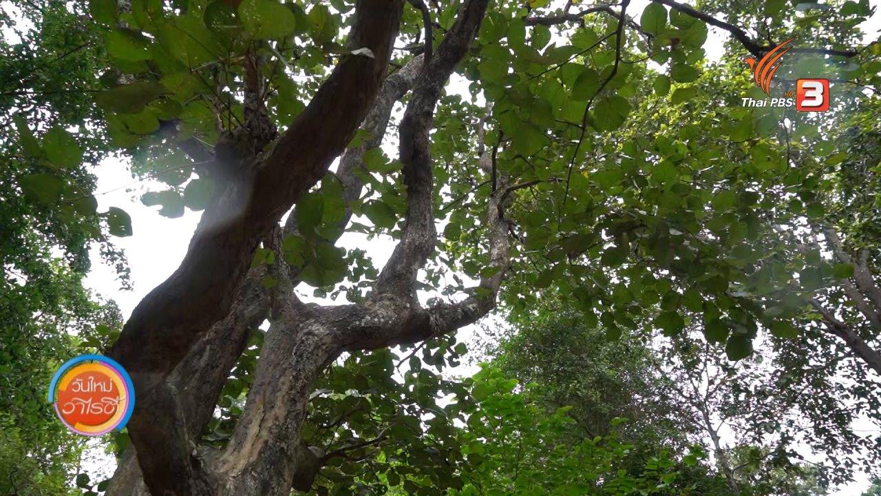 วันใหม่วาไรตี้ - วันใหม่วาไรตี้วันหยุด : สวนพฤกษศาสตร์ภาคกลางพุแค