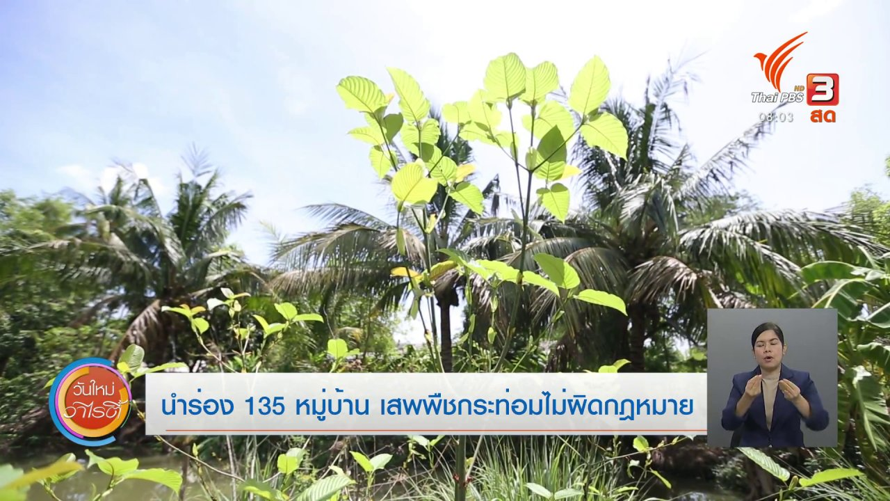 วันใหม่วาไรตี้ - จับตาข่าวเด่น : นำร่อง 135 หมู่บ้าน เสพพืชกระท่อมไม่ผิดกฎหมาย