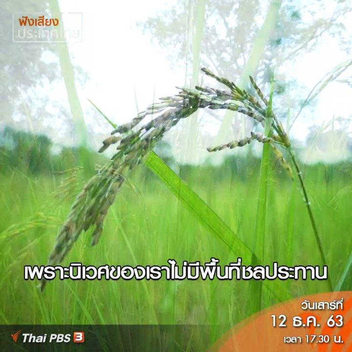 ฟังเสียงประเทศไทย - จุดเริ่มต้นการไปตามหาพันธุ์ข้าวที่หายไป