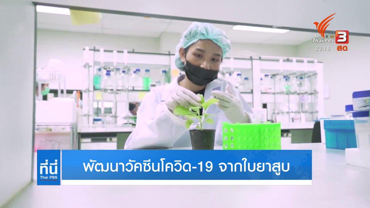 ที่นี่ Thai PBS - พัฒนาวัคซีนโควิด-19 จากใบยาสูบ